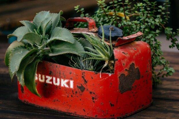 Gasoline killing plants
